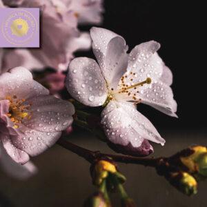 Aromaterapia per la spiritualità